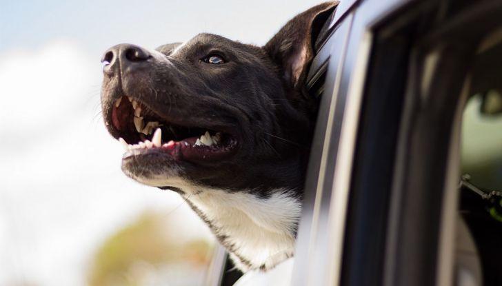 Animali in auto: come trasportare cani e gatti secondo il Codice della Strada - Foto 2 di 8