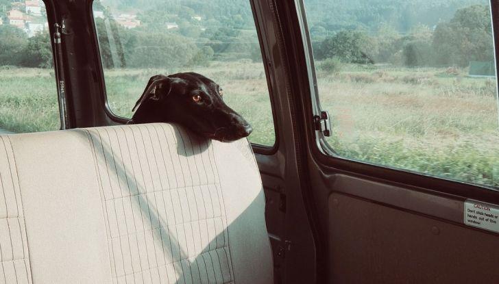 Animali in auto: come trasportare cani e gatti secondo il Codice della Strada - Foto 3 di 8