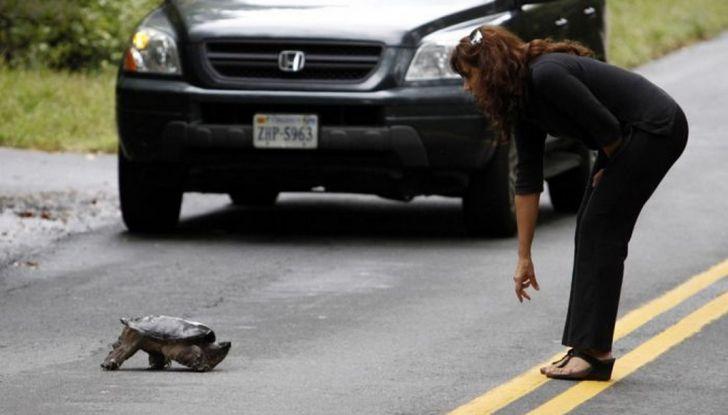 Cosa fare se si investe un animale con l'auto - Foto 6 di 11
