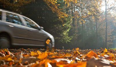 Manto stradale coperto di foglie: come guidare
