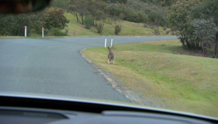Australia, i canguri fanno saltare la guida autonoma Volvo - Foto 2 di 7