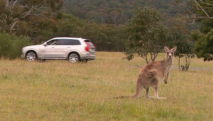 Australia, i canguri fanno saltare la guida autonoma Volvo - Foto 4 di 7