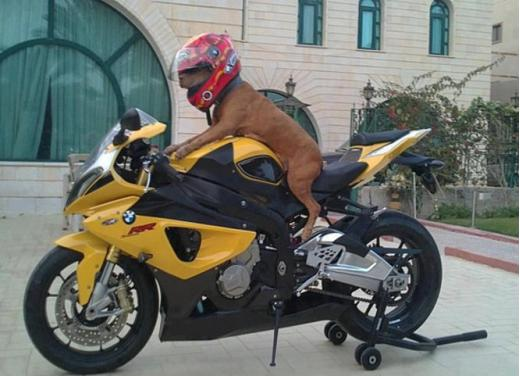 Bmw Motorrad, una gallery delle moto più strane e simpatiche - Foto 1 di 20
