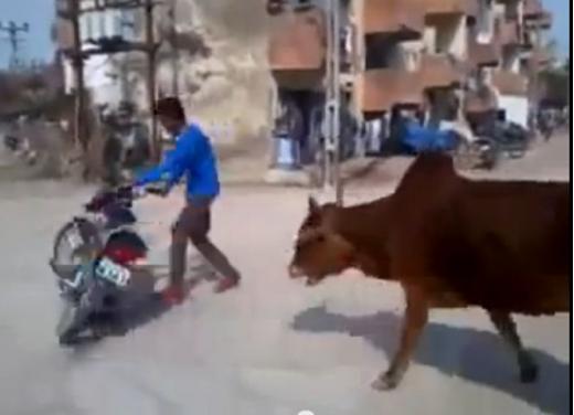 Un video mostra che non a tutti gli animali piacciono le moto